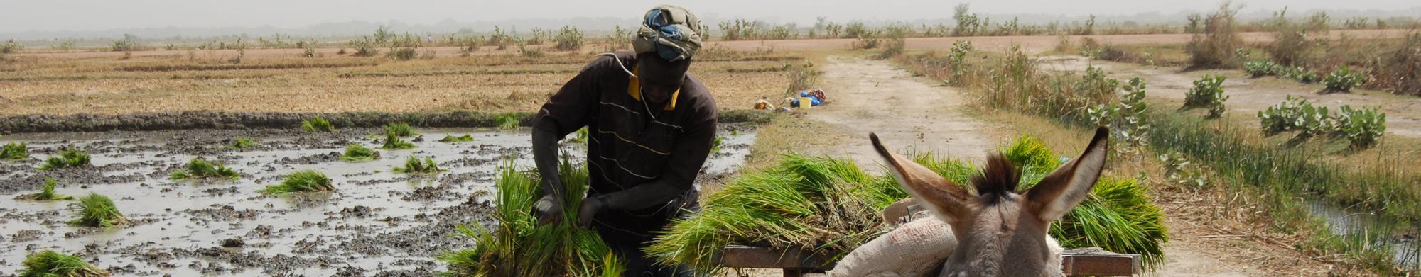 FASO JIGI, l'espoir du peuple