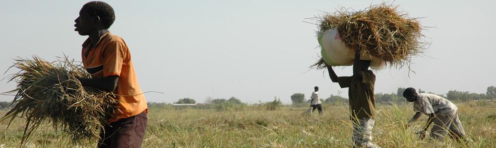L'Association des organisations professionnelles paysannes (AOPP)