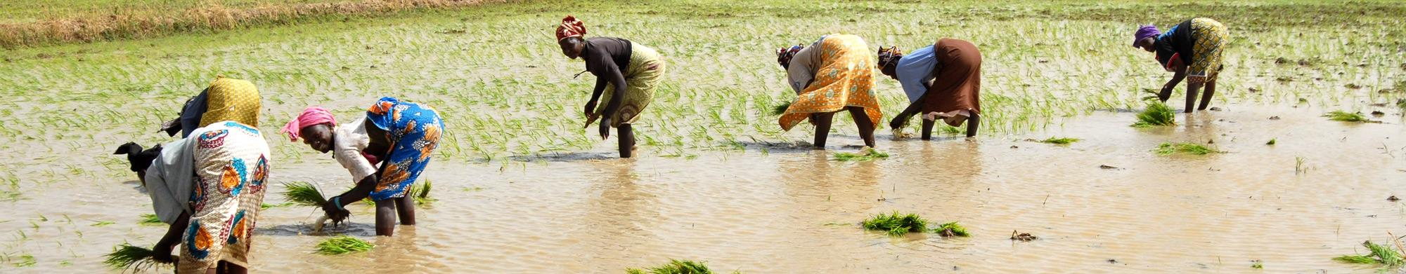 Les femmes, le pilier de l'agriculture
