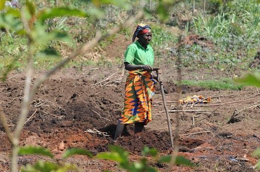 Agro-colonialisme au Congo