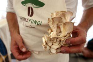 Du café aux spores, il n'y a qu'un pas : PermaFungi