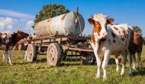 Alarmant : le prix du lait ne couvre que 65% des coûts de production !