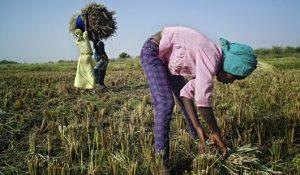 Les femmes sont responsables de la moitié de la production alimentaire mondiale et pourtant…
