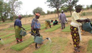 «L'eau, c'est capital pour tout humain mais c'est encore plus capital pour le monde rural»: rencontre avec l'ONG APIL