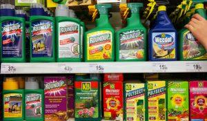 Glyphosate : la fin du célèbre herbicide de Monsanto ?