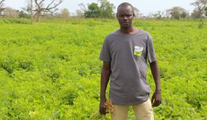 Sénégal :  les jeunes, l'avenir de l'agriculture
