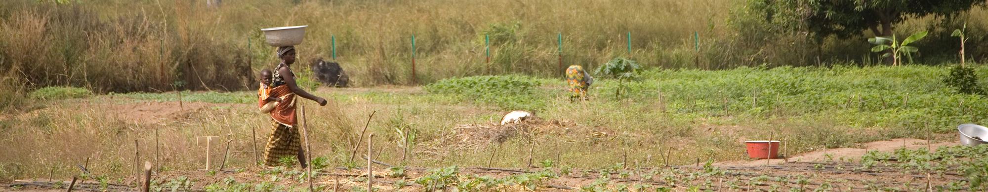 Bénin : les organisations paysannes s'opposent aux stratégies agricoles de la Banque mondiale