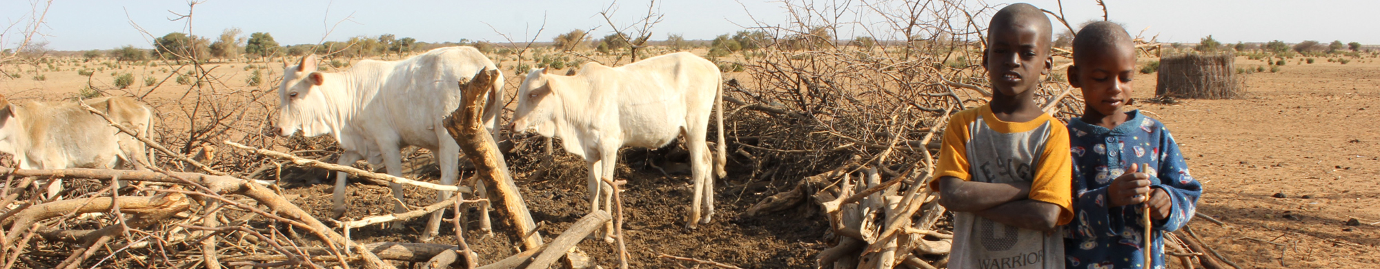 Quel avenir pour les éleveurs sénégalais ?