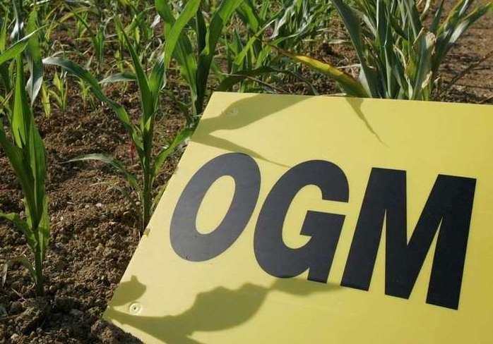 La Bolivie en mode régression OGM