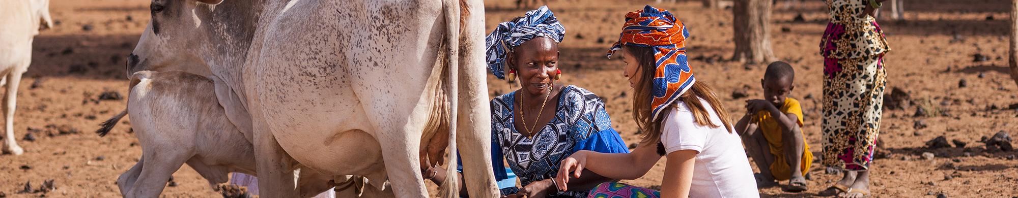 Joëlle Scoriels à la rencontre des éleveuses sénégalaises