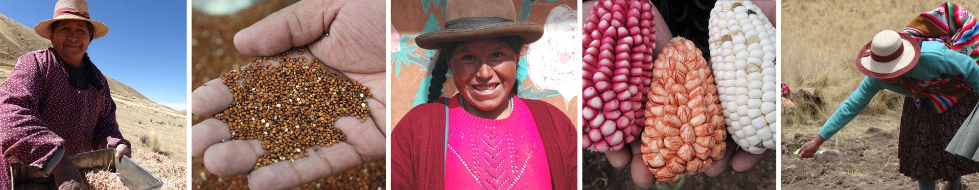 Les coopératives au Pérou : actrices de l'économie sociale et solidaire