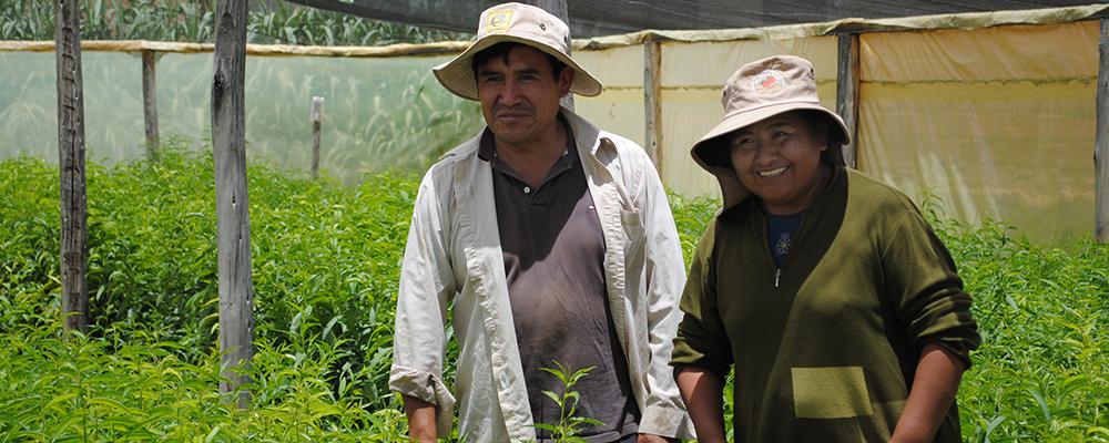 Couple d'agriculteurs boliviens