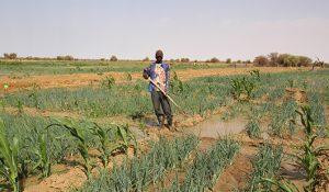 Les programmes agricoles des 5 candidats à...