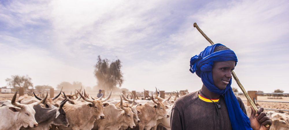 Mission au cœur du lait sénégalais