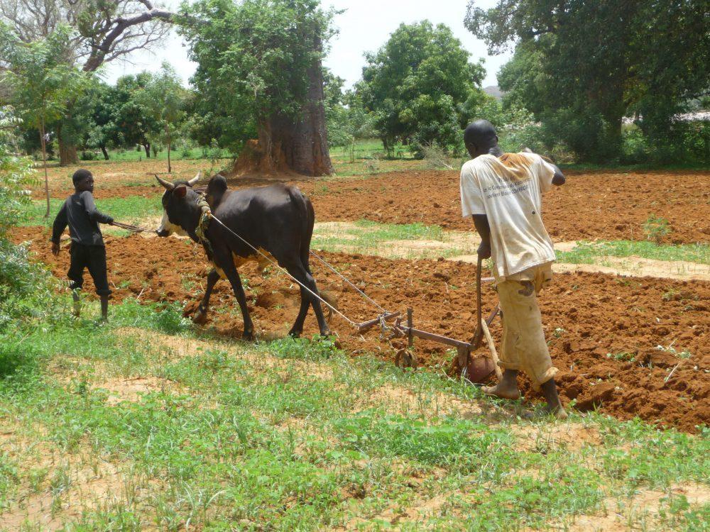 Les priorités de la Décennie de l'agricult...