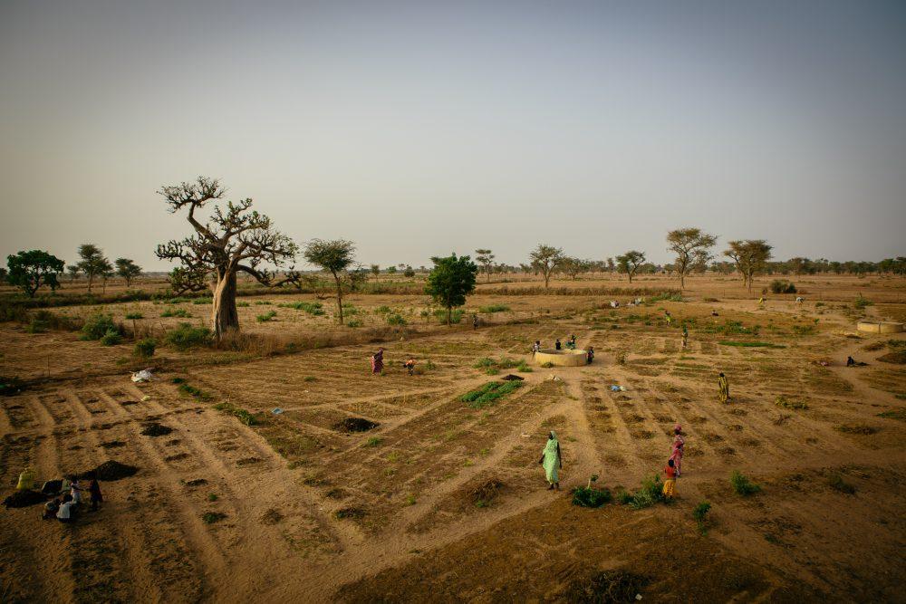 Maintenir la fertilité des sols grâce aux ...