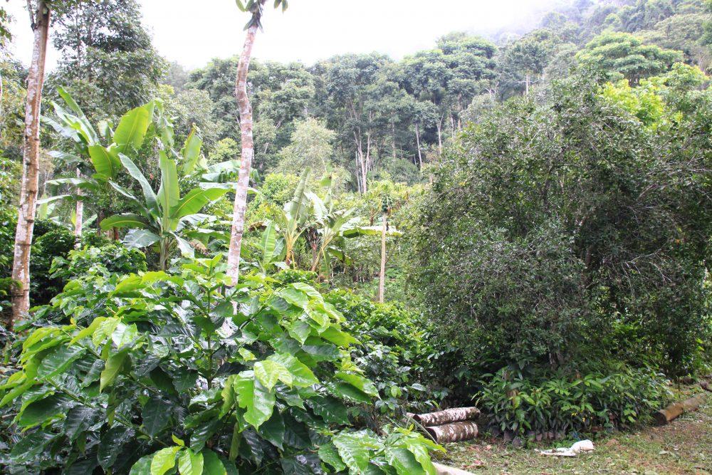 Bolivie : l'agroforesterie au service des ...