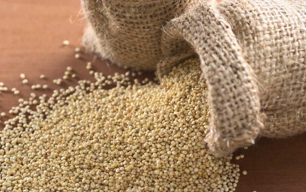 Quinoa : sème un jour récolte toujours?