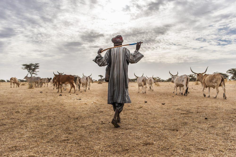 Portrait et analyse d'une Afrique qui bouge