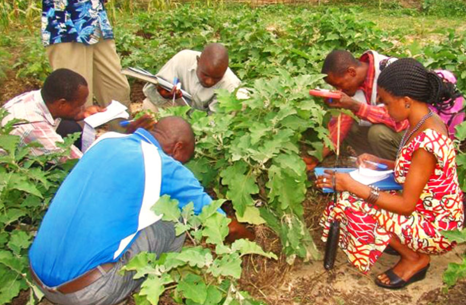 Kivu: les maraîchers presque pas encadrés