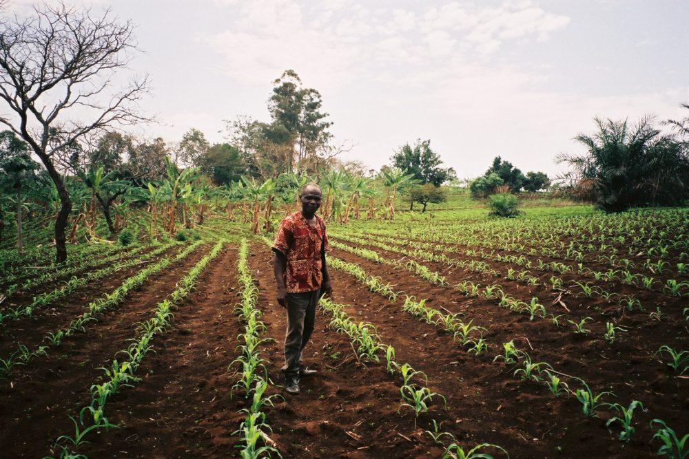 Au nom du climat, l'agroécologie devra enc...