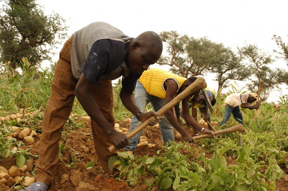 Les agricultures paysannes, une opportunit...