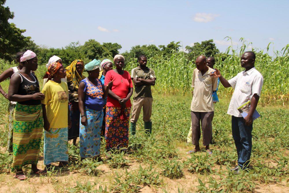Au Sénégal, la recherche-action pour améli...