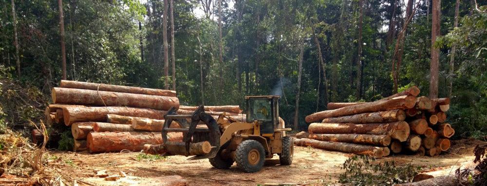 En Côte d'Ivoire, des forêts communautaire...