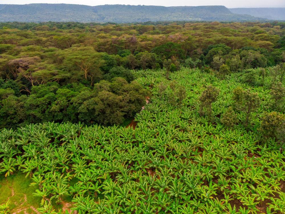 Plantations forestières, faut-il reboiser ...