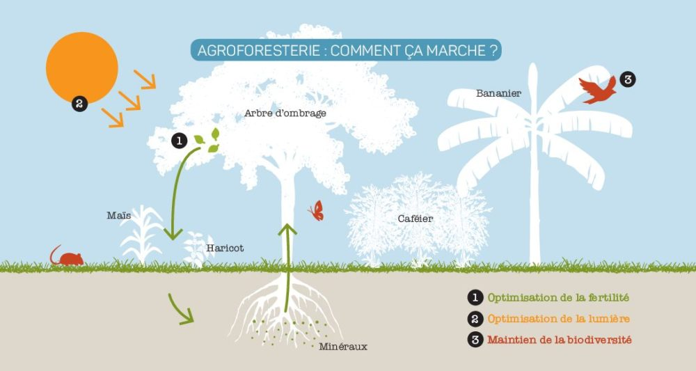L'agroforesterie au Sahel, une solution po...