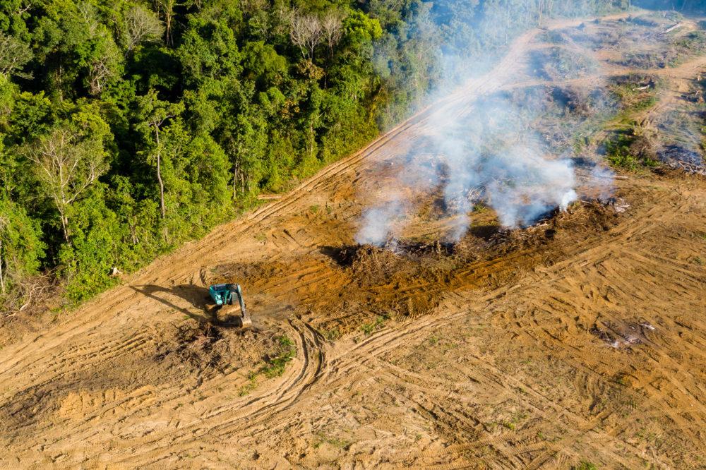 Contre la déforestation, agir sur le terra...