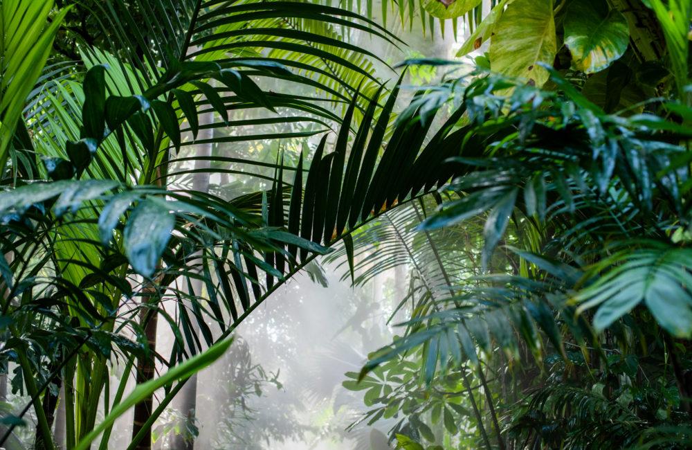 Des forêts partout menacées, des communaut...