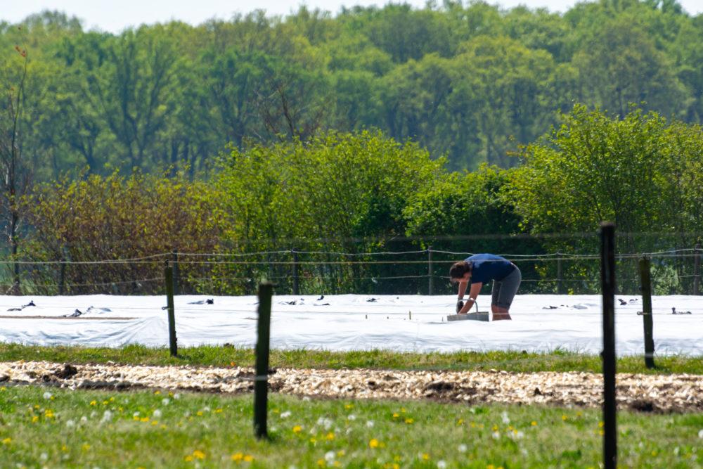 Agricultures européennes :  réformer la li...