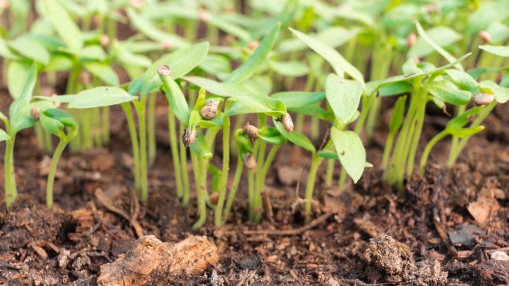 L'agroécologie après la pandémie ?